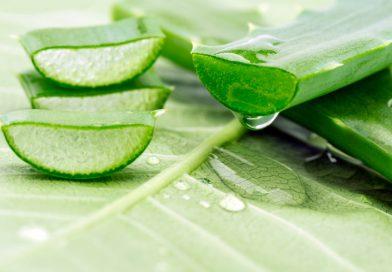Aloe Vera The Wonder Herb for Sexual Wellness